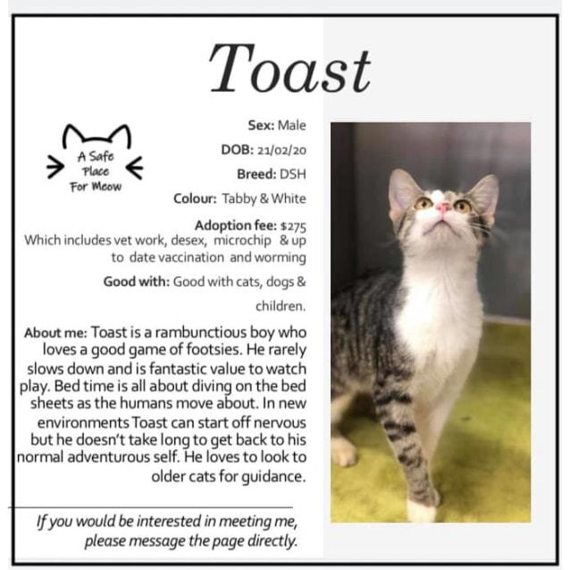 Photo of Toast