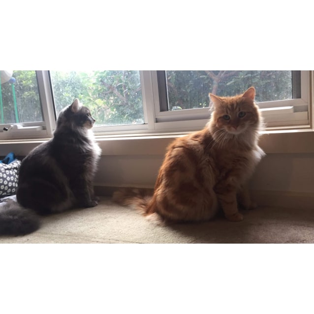 Photo of Kayden & Zac ❤❤