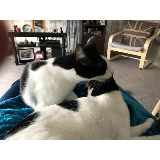 Photo of Bronwen & Briannah