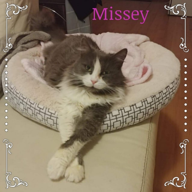 Photo of Missey