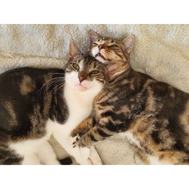 Photo of Octavia & Quinn (Located In Oakleigh South)