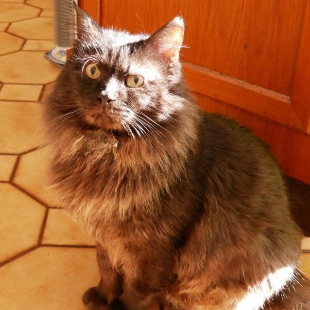 Photo of Scruff