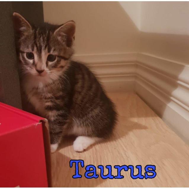 Photo of Lizzie And Taurus ❤❤
