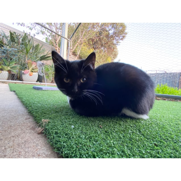 Photo of Milo & Bug