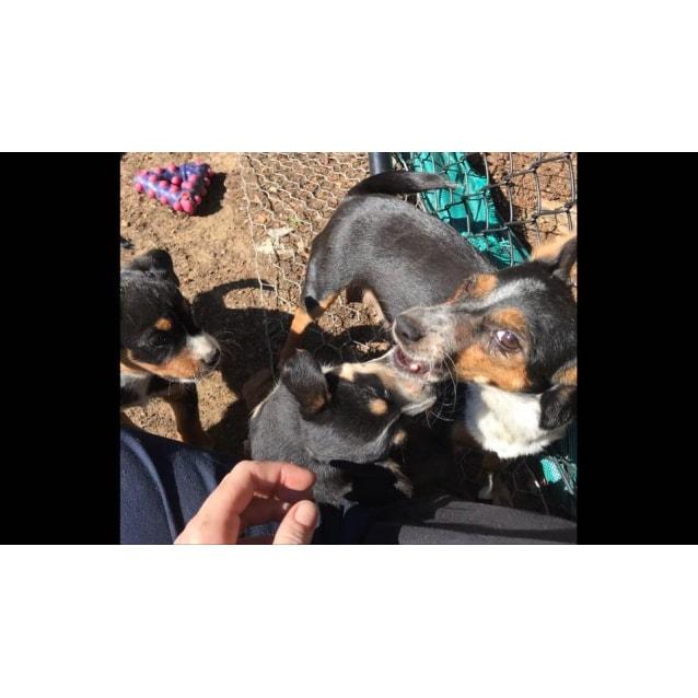 Photo of Jo Jo Plus Two Pups