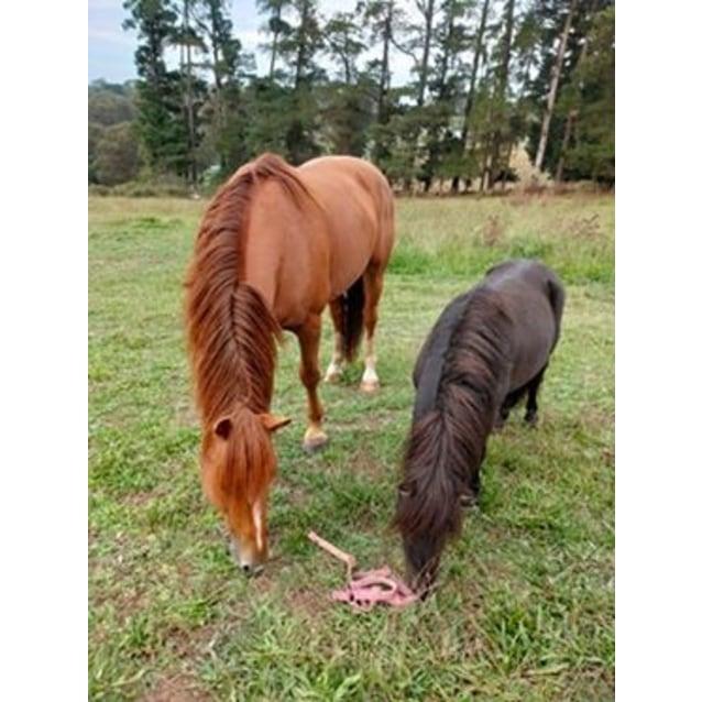 Photo of Kitchi & Cody Beautiful Bonded Duo