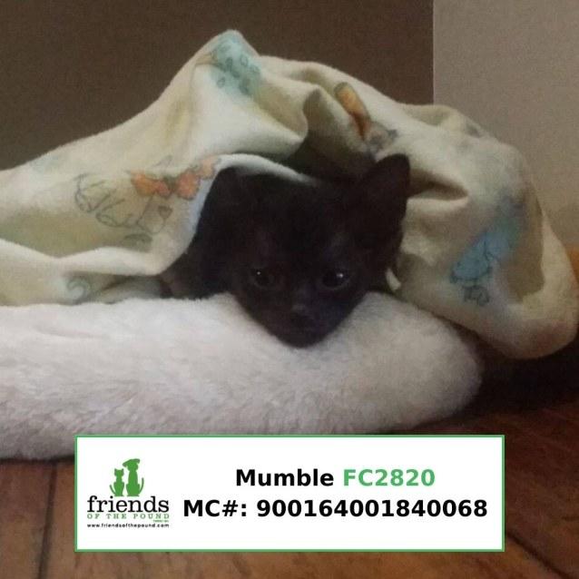 Photo of Mumble