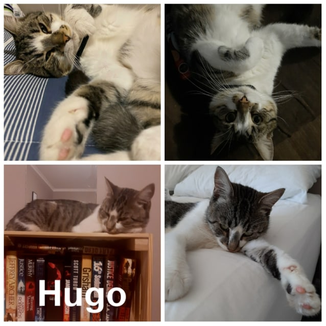 Photo of Hugo
