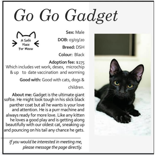 Photo of Gadget