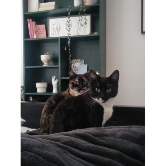 Photo of Pico & Tortilla (Located In Elsternwick)