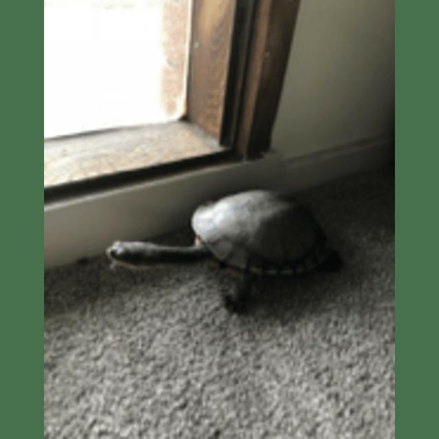 Photo of Donatello