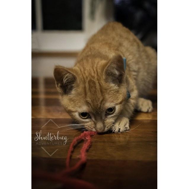 Photo of ~On Trial~ Pop & Fizzy ~ 10 Week Old Kittens