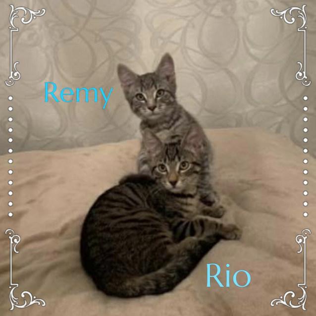 Photo of Rio & Remy