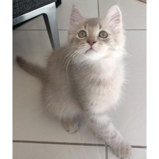 Photo of Caramel