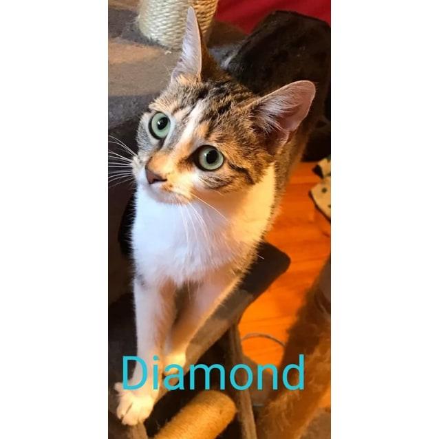 Photo of Diamond