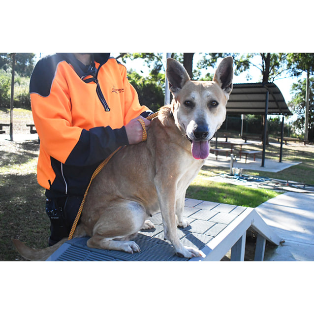 Photo of Calamity Jane 32802 Campbelltown Acf