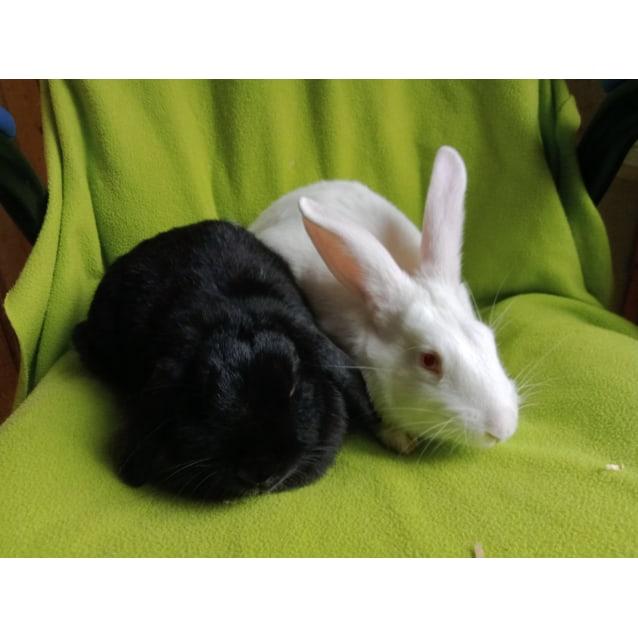 Photo of Julius & Starlight