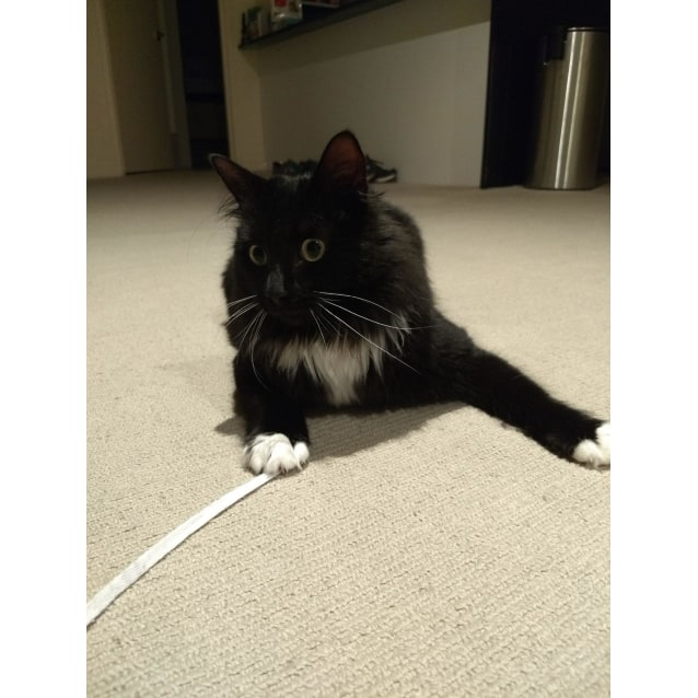 Photo of Merlin   Located In Moonee Ponds