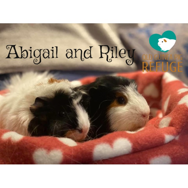 Photo of Abigail And Riley (Unsuitable For Kids Under 13)