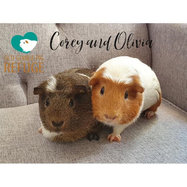 Photo of Corey (Desexed Male) And Olivia