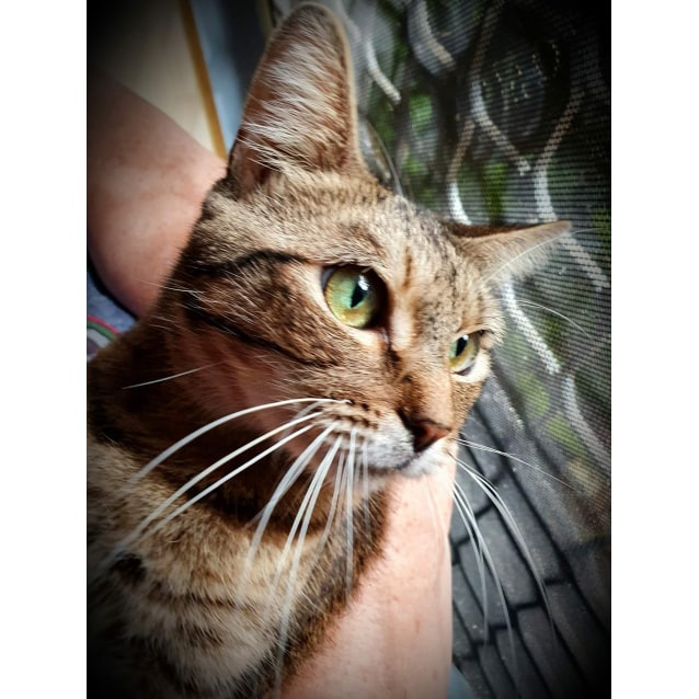 Photo of Abby