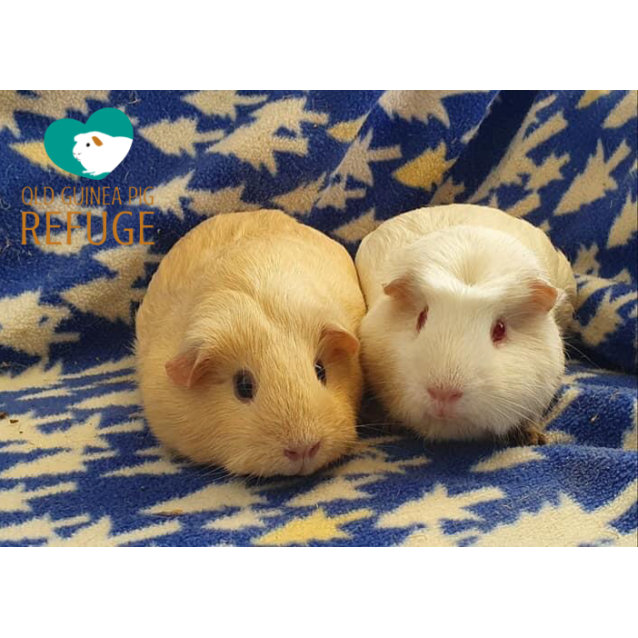 Photo of Lucy And Alfie (Desexed Male)