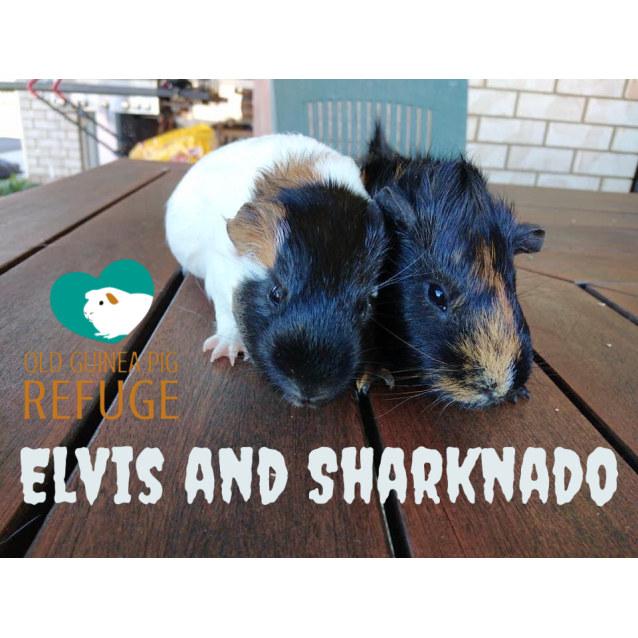 Photo of Elvis And Sharknado