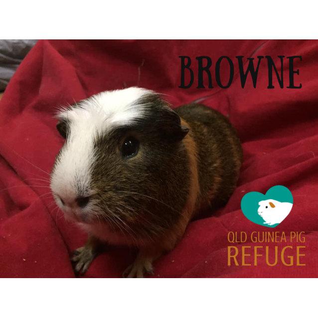 Photo of Browne