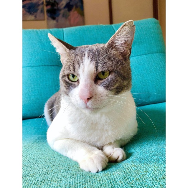 Photo of Admiral Whiskers