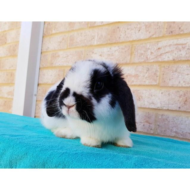Photo of Maverick *Adopted*
