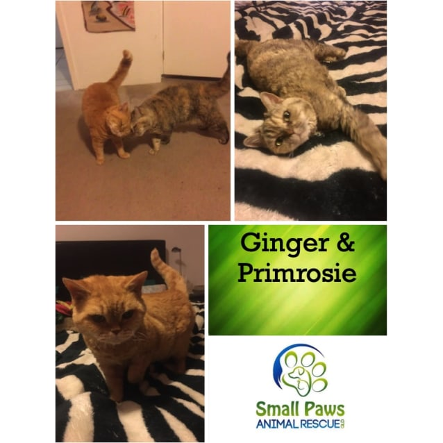 Photo of Ginger And Primrosie