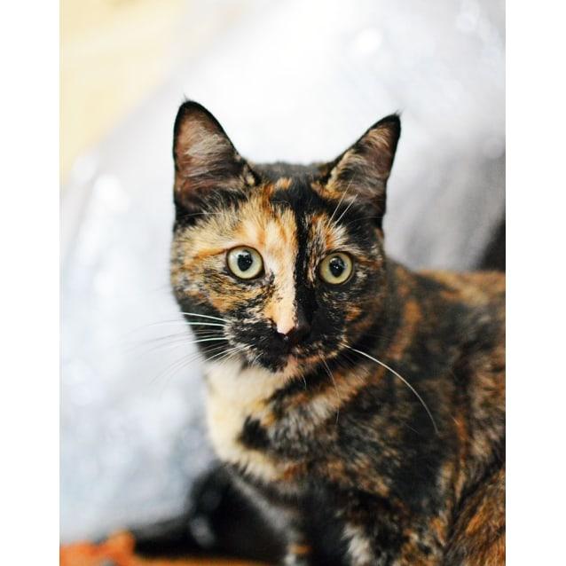 Photo of Lulu