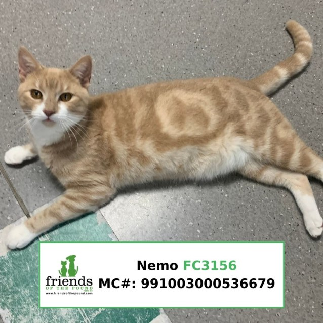 Photo of Nemo