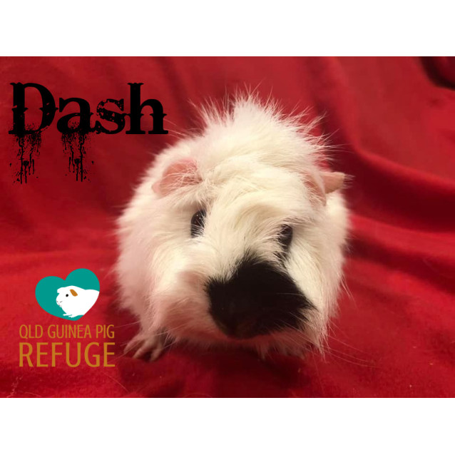 Photo of Dash