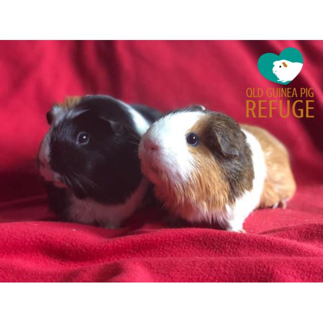Photo of Dixie And Berta