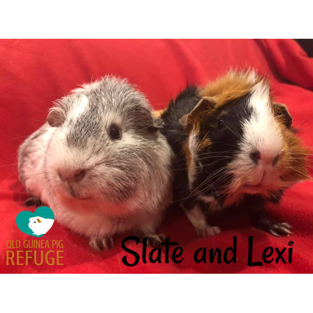 Photo of Slate (Desexed Male) And Lexi