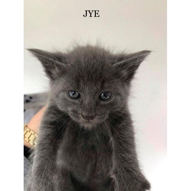 Photo of Jye