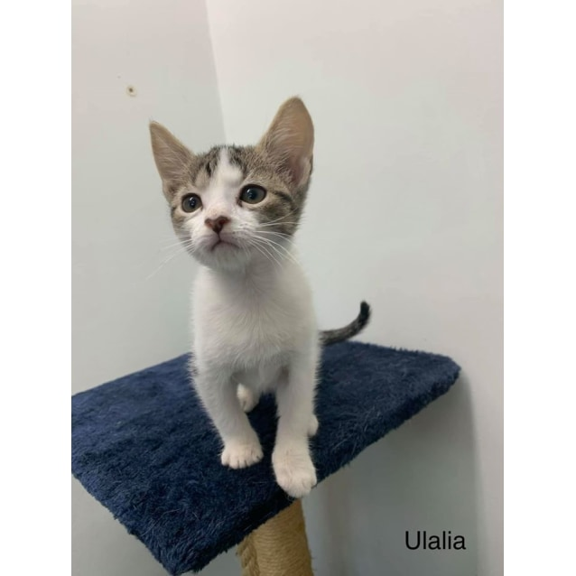 Photo of Ulalia
