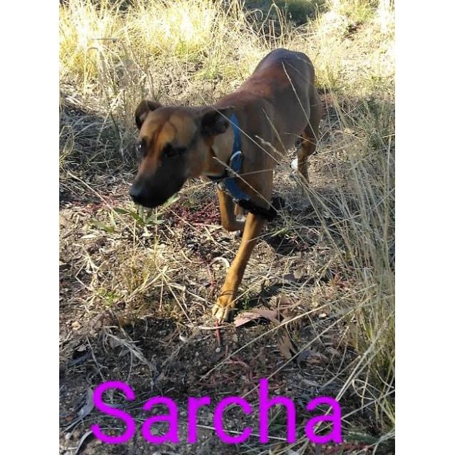Photo of Sarcha