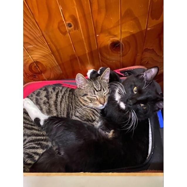 Photo of Hugo & Tigger