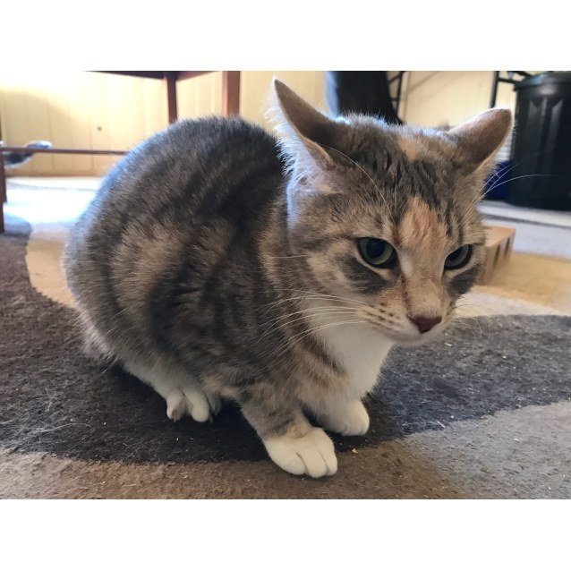 Photo of Taffy