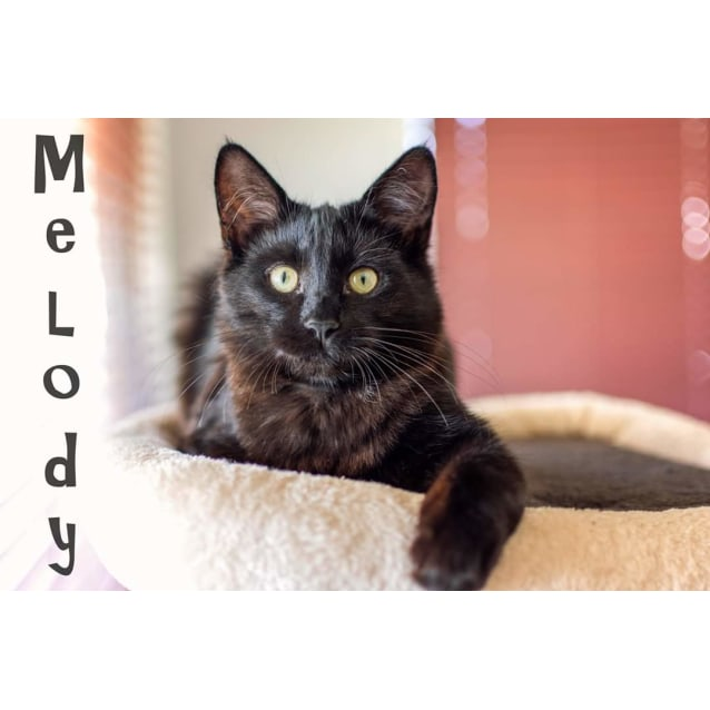 Photo of Melody