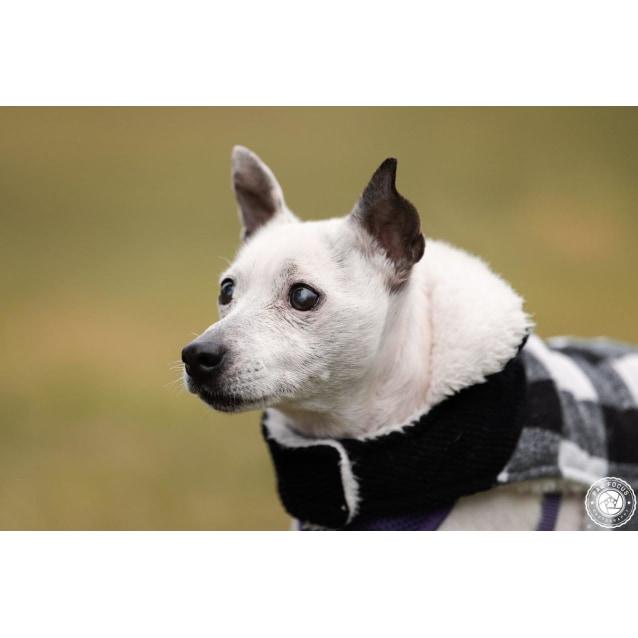 Photo of Quigley
