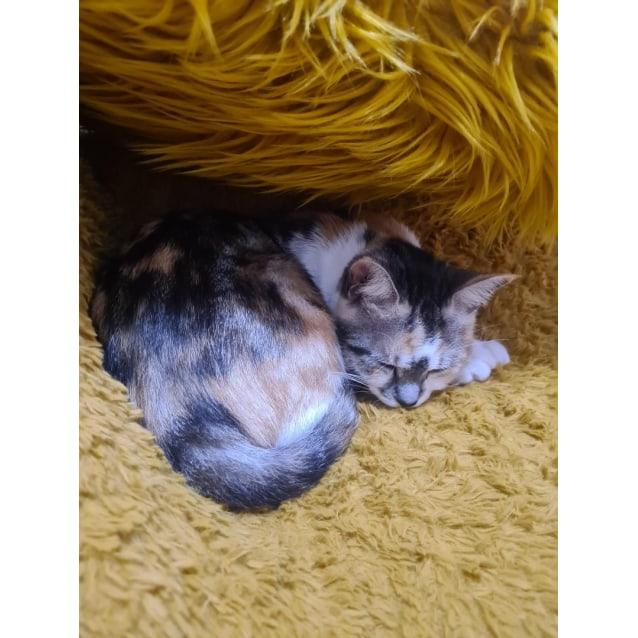 Photo of Princess Flicky