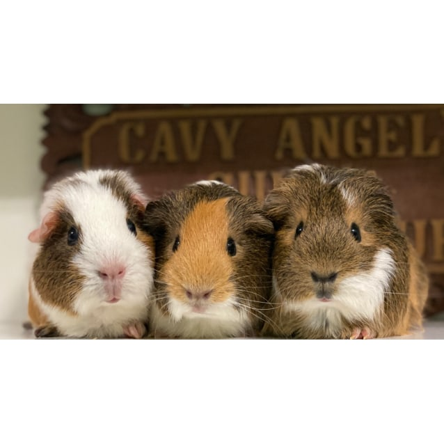 Photo of Pancake, Waffles & Maple