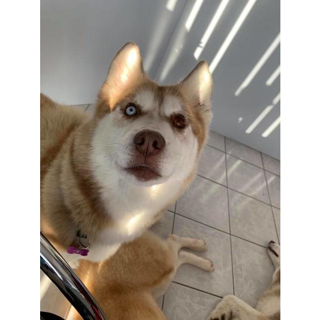 Photo of Sadie