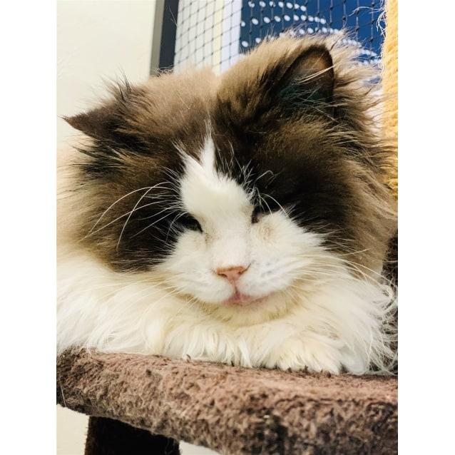 Photo of Gatsby