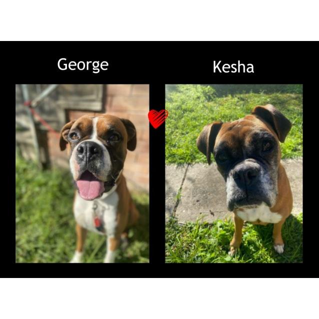 Photo of Kesha And George