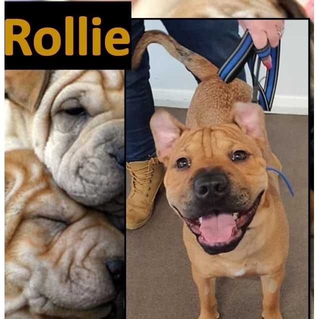 Photo of Rollie