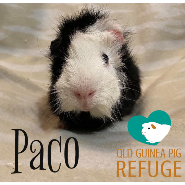 Photo of Paco